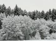 Foto: 19.2.2021 © Siegfried Preiml